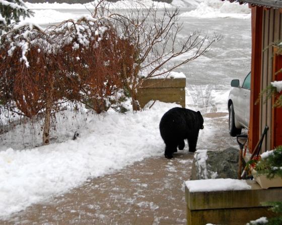 bear whistler