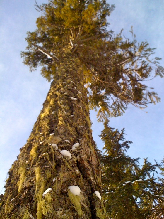 tree in whistler