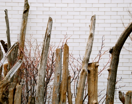 NYC, Photography, Driftwood