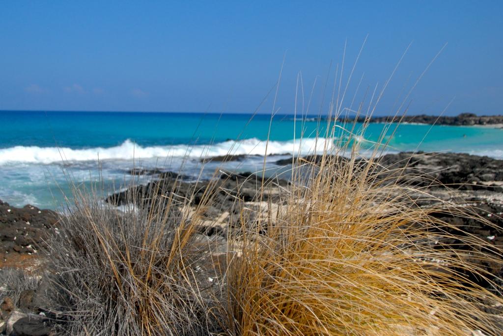 Hawaii, seagrass, ocean wave