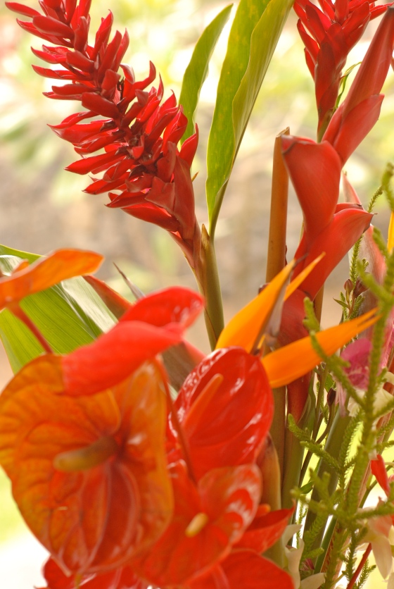 red ginger, flowers, hawaii
