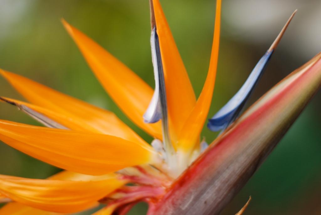 Big Island, Hawaii, photography, flower