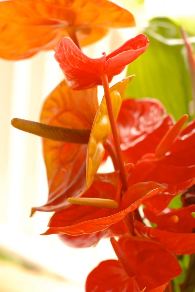 hawaii, nature, flower, photography