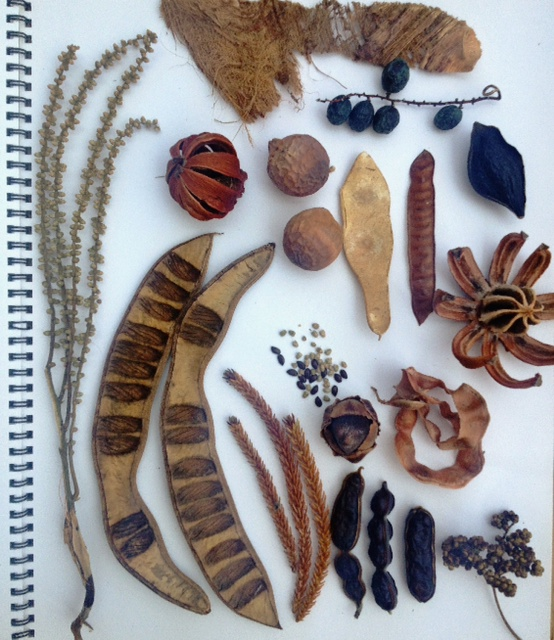 Seed and pod inspiration - Objects inspired by nature ...