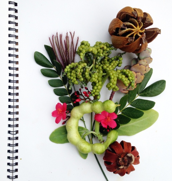 Julie Hamilton Designs -seed and pod inspiration {artistically afflicted blog}