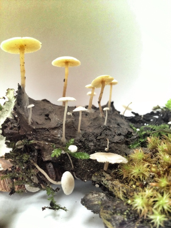 Mushroom - julie hamilton designs {artistically afflicted blog}